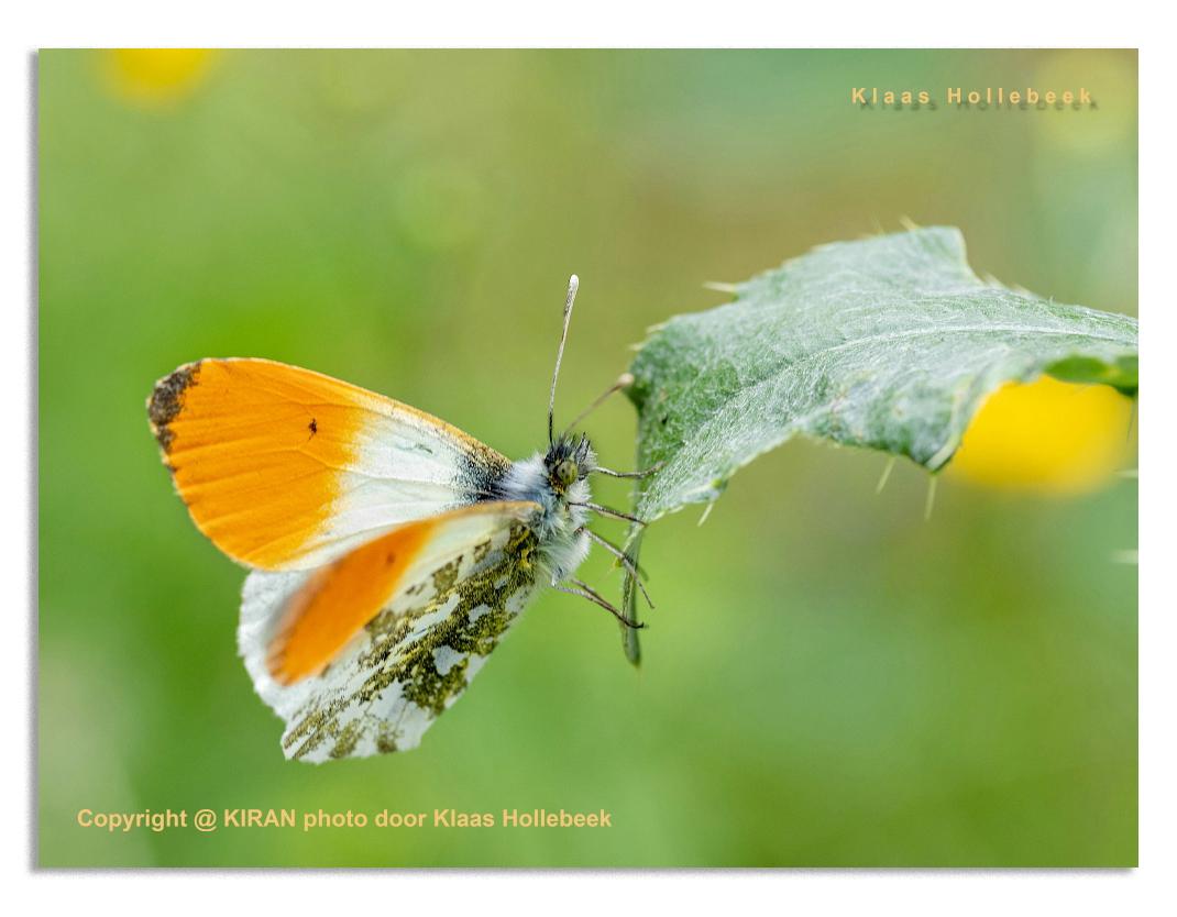 web_web_oranje-tipje-IMG_0217
