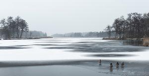 Winter in Nederland met eenden op het ijs