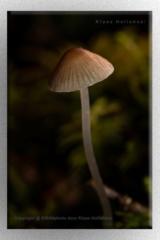 NP paddenstoel IMG 4791