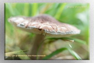 NP paddenstoel IMG 4963